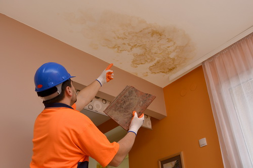 Mold Damage Claims in Naples FL